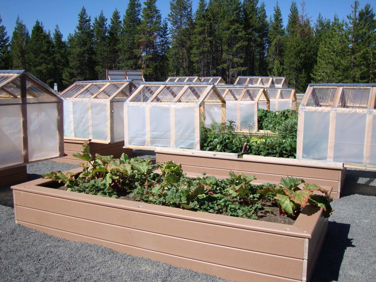 danger garden Minigreenhouses or raised beds? Both