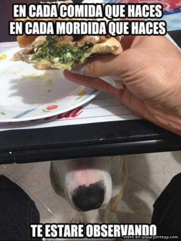En Cada Mordida Que Haces Te Estare Observando Imagenes Divertidas Fotos De Perros Perros