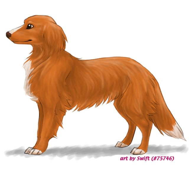 FP comm. 4 - Toller by shelzie on deviantART