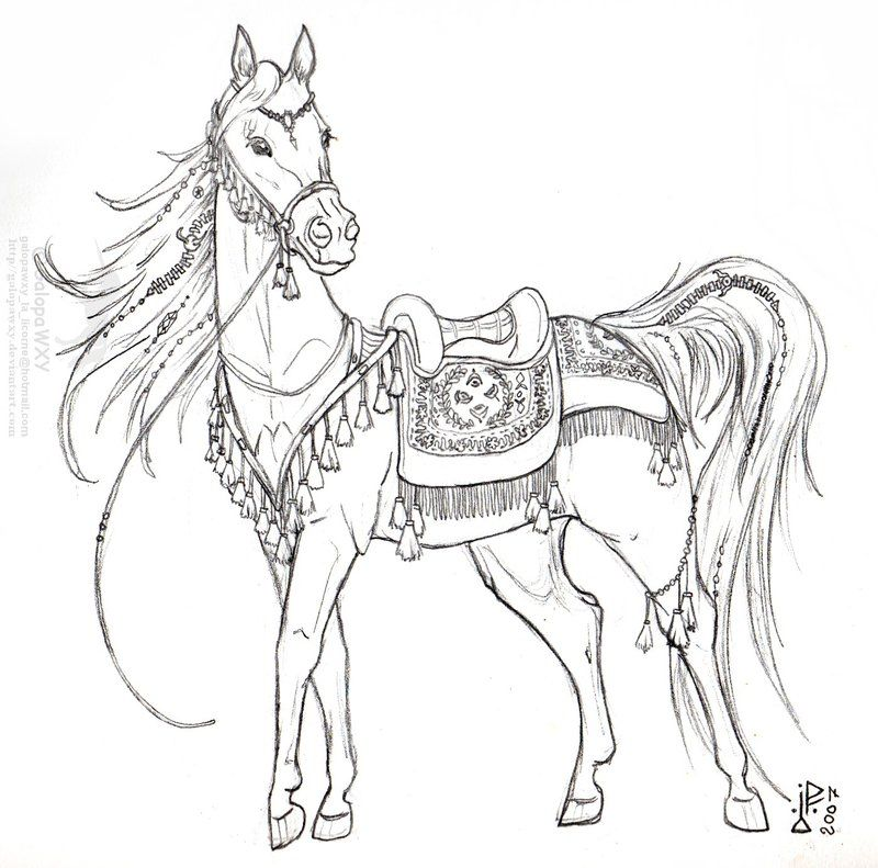Horse Tack Coloring Pages Taken