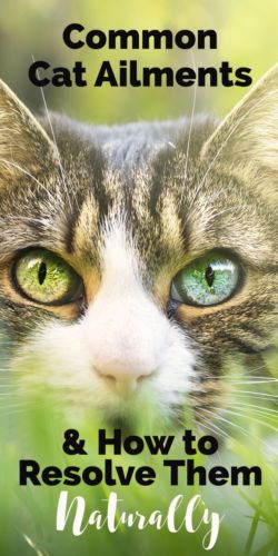 Common Cat Ailments How To Resolve Them Naturally Cat Ailments Sick Cat Cat Care