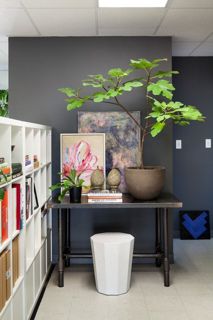 How to Style, and Care For, Indoor Plants | Fig tree, Fern and Plants