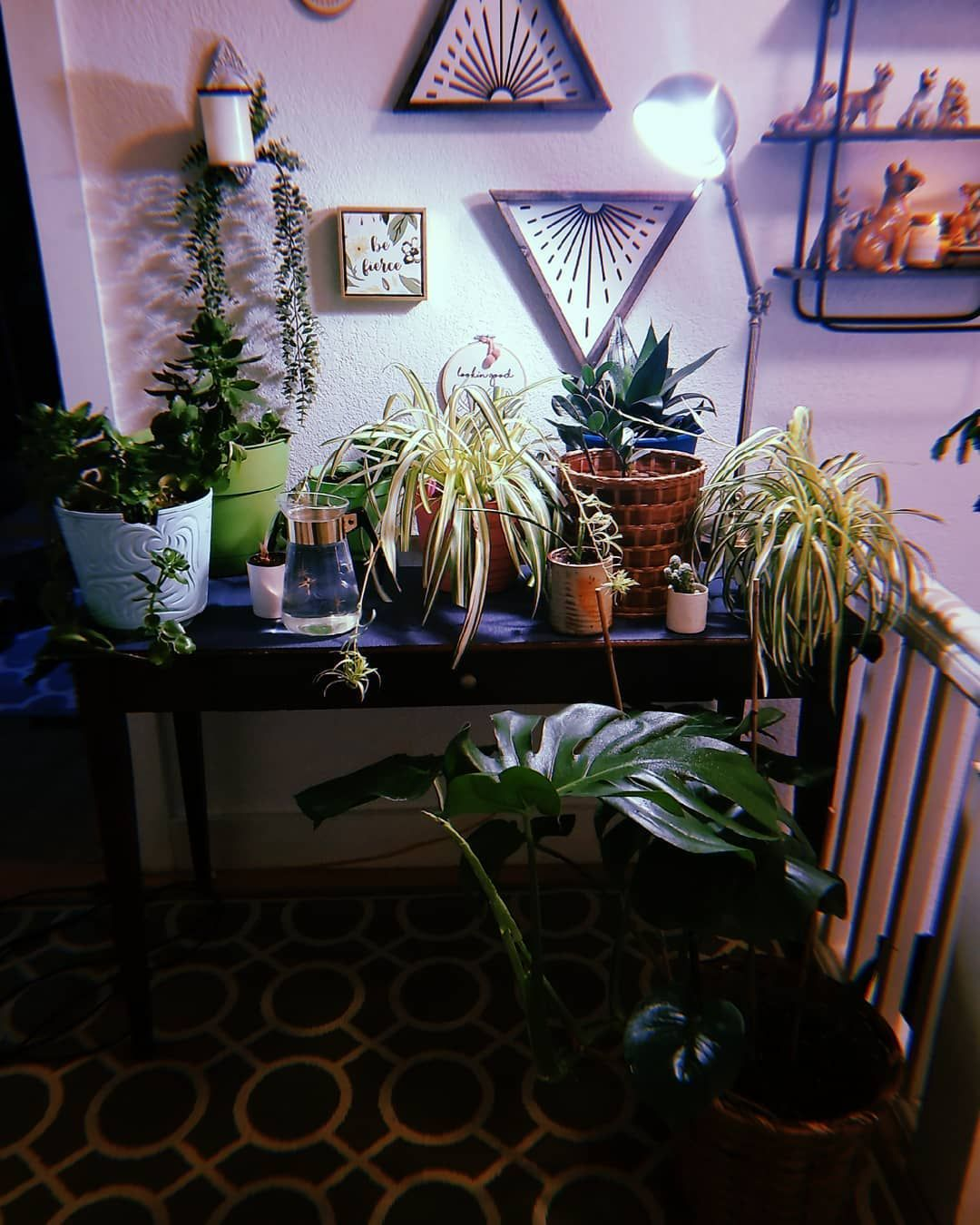 How To Choose The Best Light For Growing Plants Indoors 2020 Edition In 2020 Growing Plants Indoors Growing Plants Indoor Plants