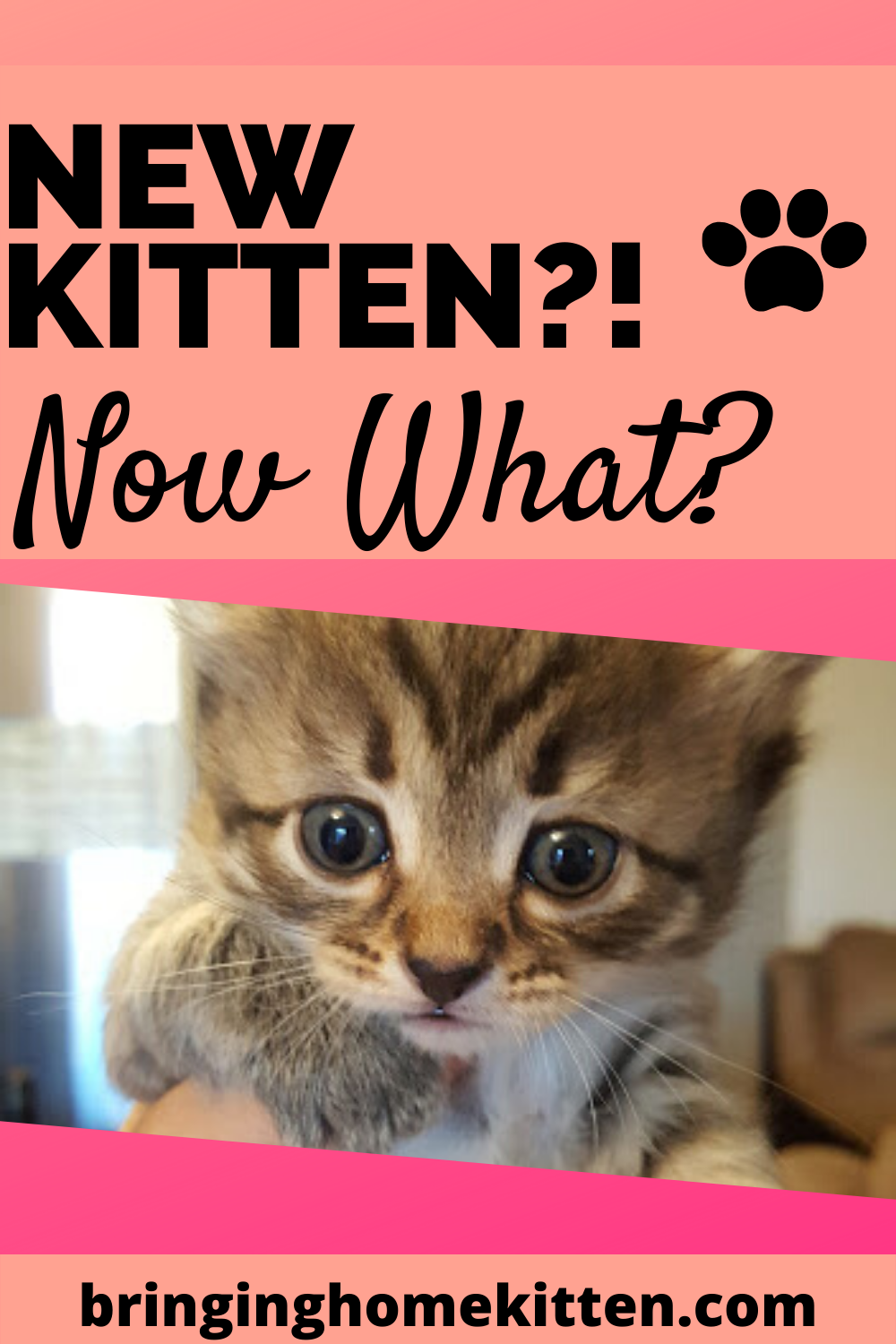 Preparing For A New Kitten In 2020 Getting A Kitten Kitten Cat Mom