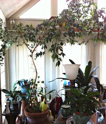 pony & petal: Show and Tell: Grandma\'s House-large indoor tree ...