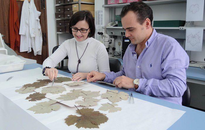 Una investigación estudia mediante ADN las variedades de vid del herbario más antiguo del mundo https://www.vinetur.com/2015011917928/una-investigacion-estudia-mediante-adn-las-variedades-de-vid-del-herbario-mas-antiguo-del-mundo.html