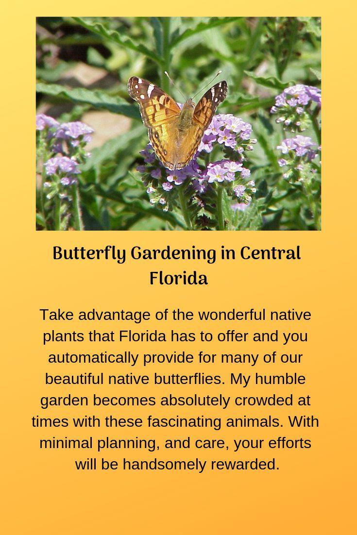 Butterfly Gardening in Central Florida | Butterfly garden ...