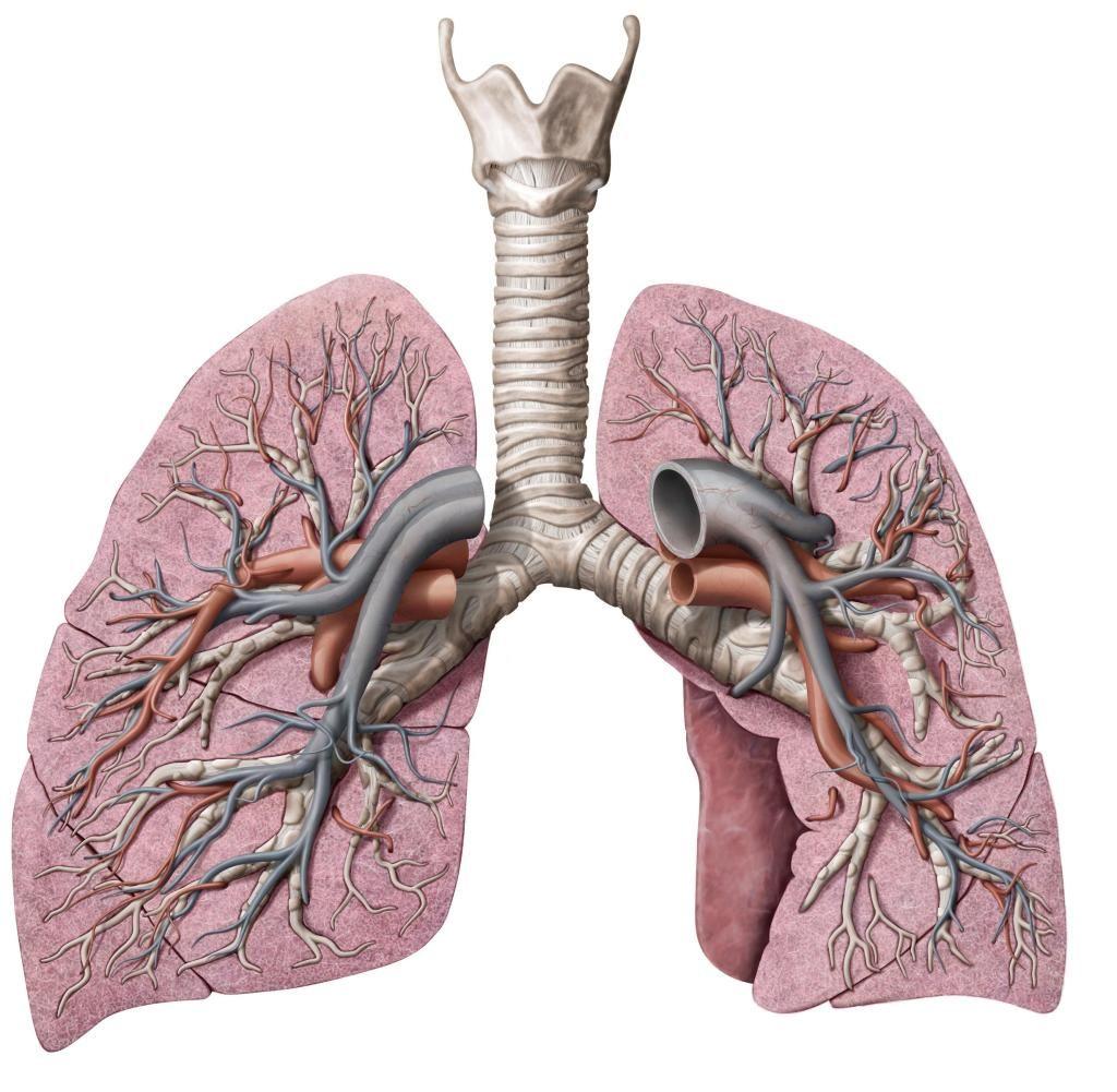 Herzinfarkt Husten Atmen
