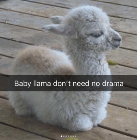 37 Happy Snappy Animal Snapchats To Make You Laugh | CutesyPooh