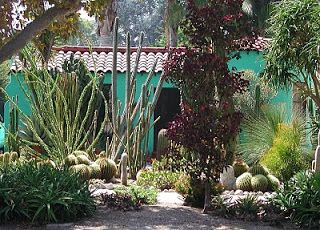 Fairy Yardmother Front Yards Cacti And Succulents Succulents