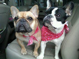 Gidget and Luna