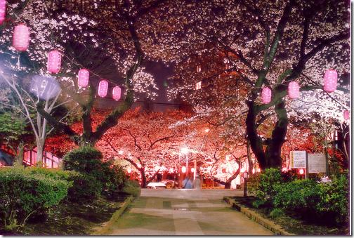 Tokyo Hanami Guide The Official Tokyo Travel Guide Go Tokyo Tokyo Travel Guide Cherry Blossom Japan Hanami