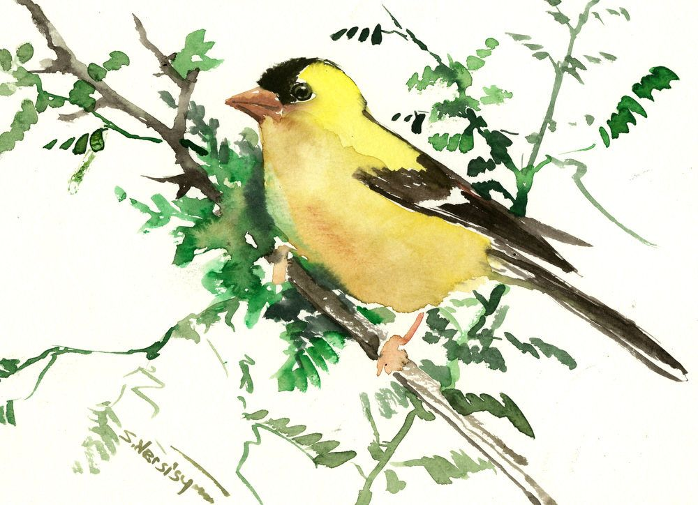 American Goldfinch Artwork bird art original watercolor one of a ...