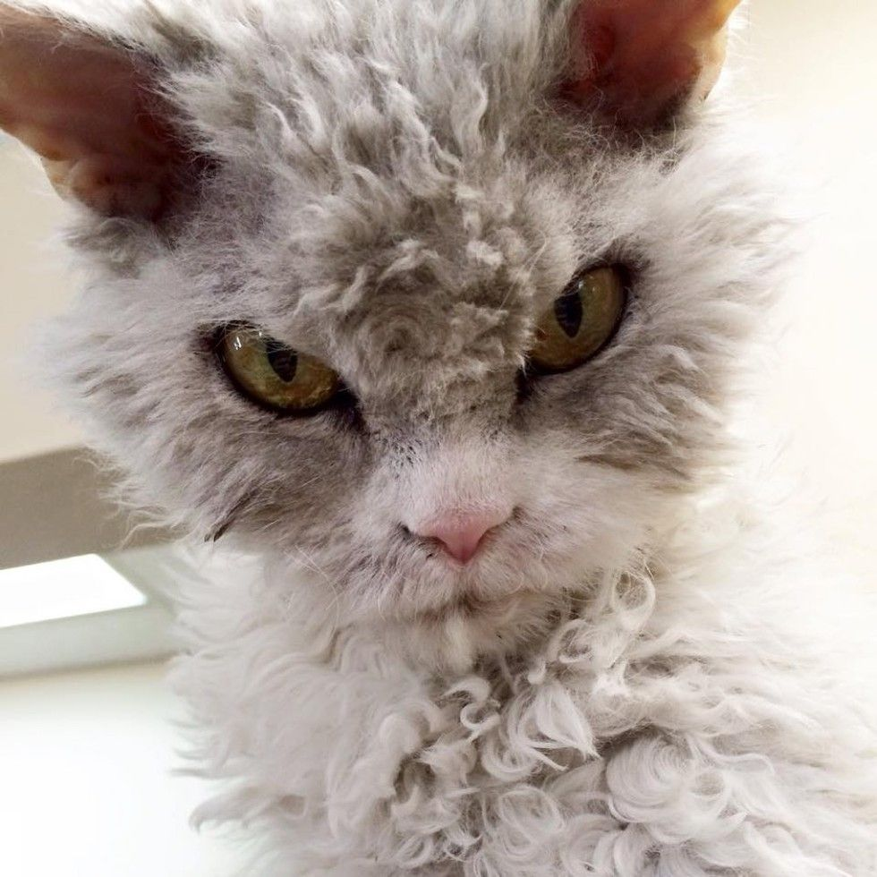 Frowning Kitty Has Ability To Stare And Glare Without Moving Animals Kitty Funny Animals
