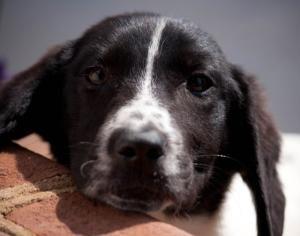 Adopt Sneezy On Petfinder Basset Hound Dog Hound Dog Love Pet