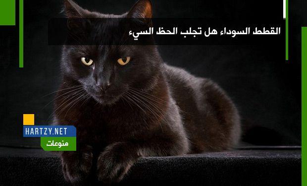 القطط السوداء هل تجلب الحظ السيئ Hartzy هارتزي Lockscreen Lockscreen Screenshot Art