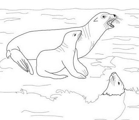 Sea Lion With Its Baby Coloring Pages For Kids Eik Printable Sea Lions Coloring Pages For Kids