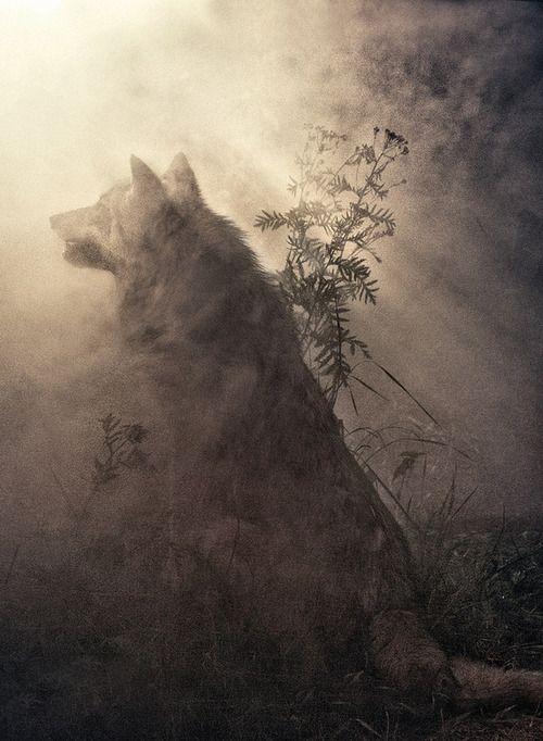 霧の中のオオカミ イラスト Illustration オオカミ オオカミ