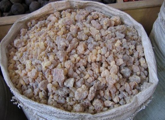Smell You Later: Frankincense Trees Facing Inevitable Extinction