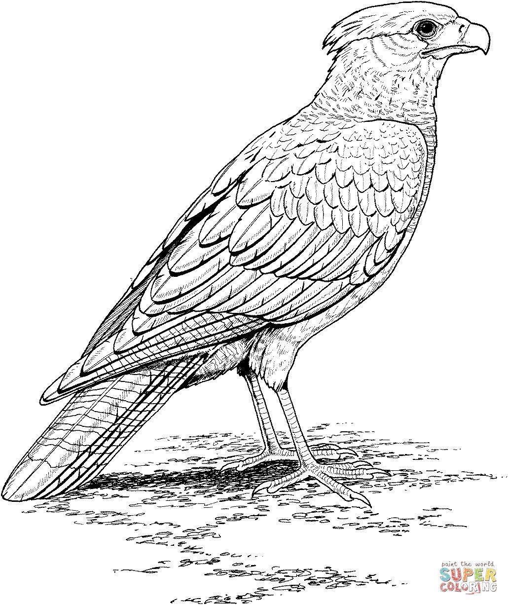 Excellent Picture Of Falcon Coloring Pages Bird Coloring Pages Animal Coloring Pages Flower Coloring Pages