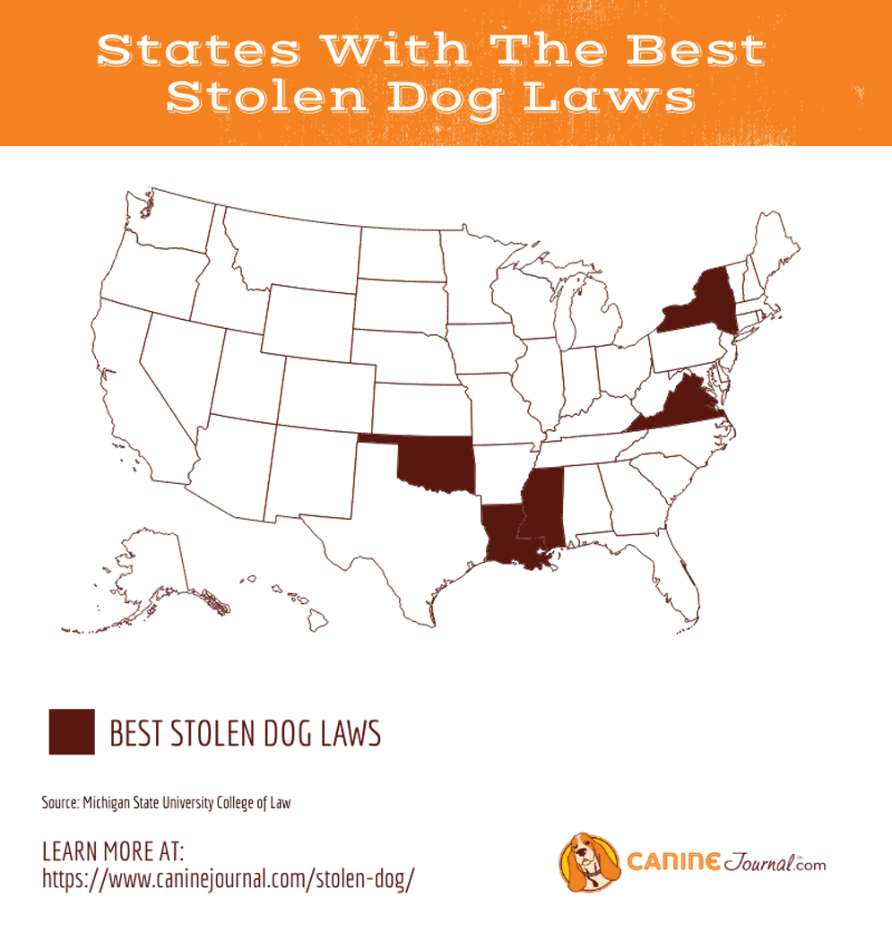 The Alarming State Of Stolen Dog Laws How To Prevent Pet