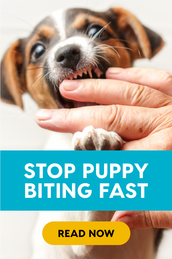 Stop Puppy Biting Fast With These 10 Tips Pupford Stop Puppy