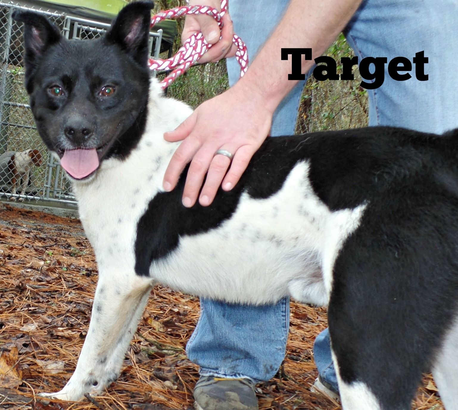Meet Target This Chow Chow Retriever Mix Available For Adoption