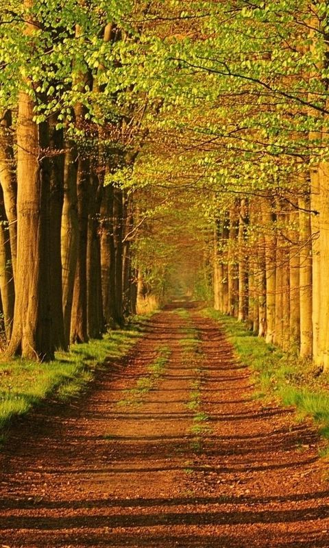Download Hd Wallpapers Images For Mobile Desktop Laptop Hd Nature Wallpapers Beautiful Nature Woodland Wallpaper