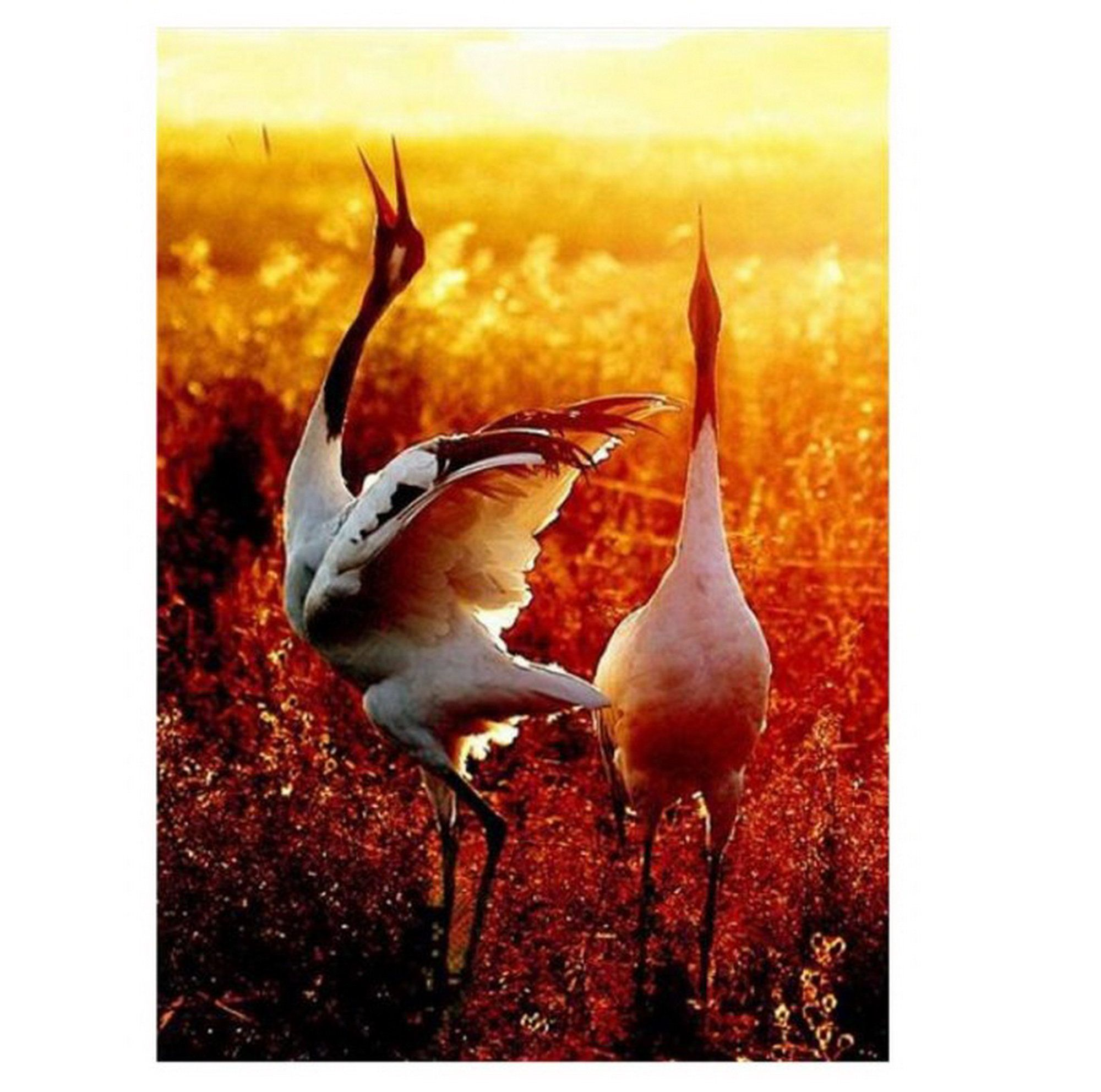 """19.68x15.7"""" Cranes Paint by Number, with/without Frame"""
