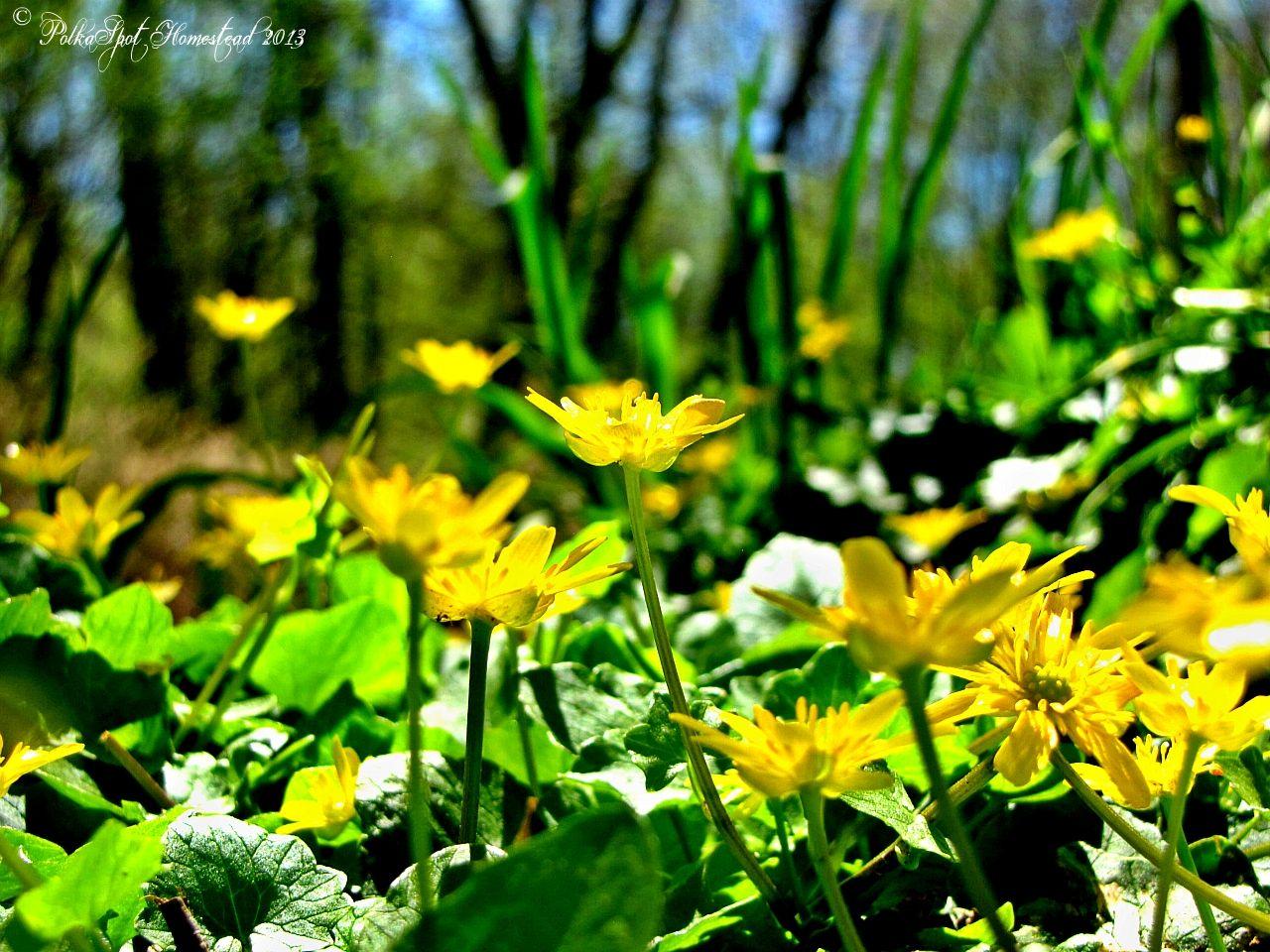 Native flower patch. PolkaSpot Homestead. 2013.