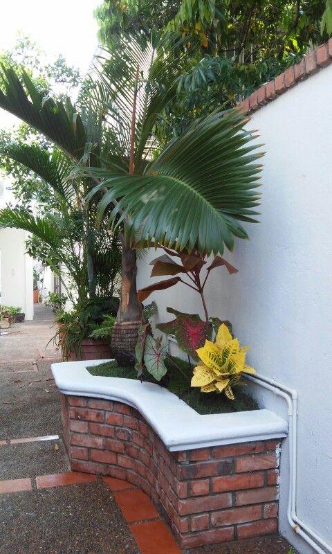 Palma mascare a en jardinera de ladrillo jardin en 2019 for Disenos de casas rusticas de ladrillo