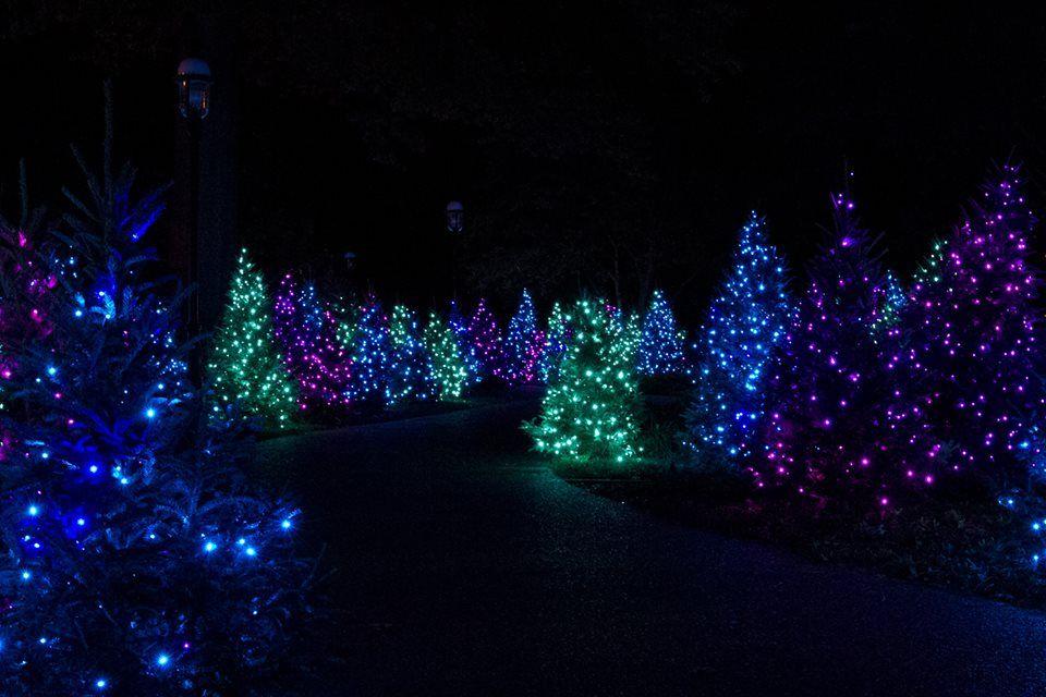 Light Show Botanical Gardens St Louis