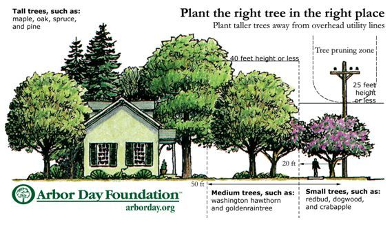 Right Tree In The Right Place Via The Arbor Day Foundation