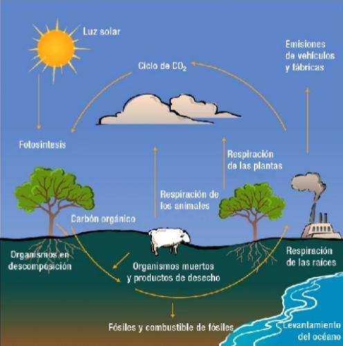 El ciclo del carbono es la sucesión de transformaciones que sufre el carbono a lo largo del tiempo. Es un ciclo biogeoquímico de gran importancia para la regulación del clima de la tierra y en el se ven implicadas actividades básicas para el sostenimiento de la vida.