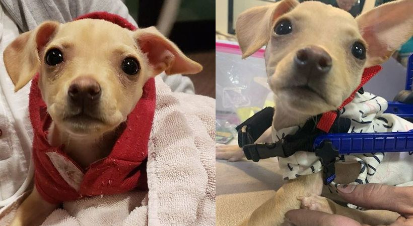 A Christmas Wish For Hope Rescue Dogs Dog Wheelchair Pets