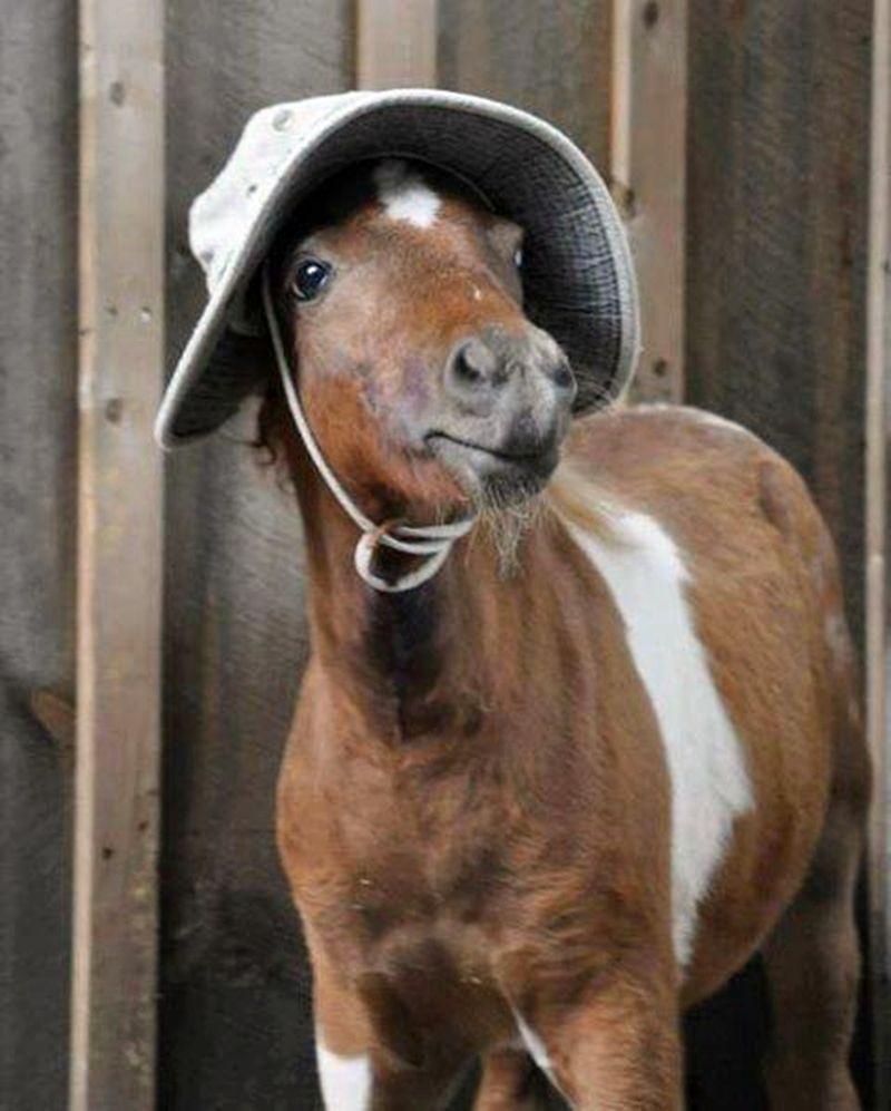 Little horse wearing hat #cuteanimals   Horses We ℒℴѵℯ ...