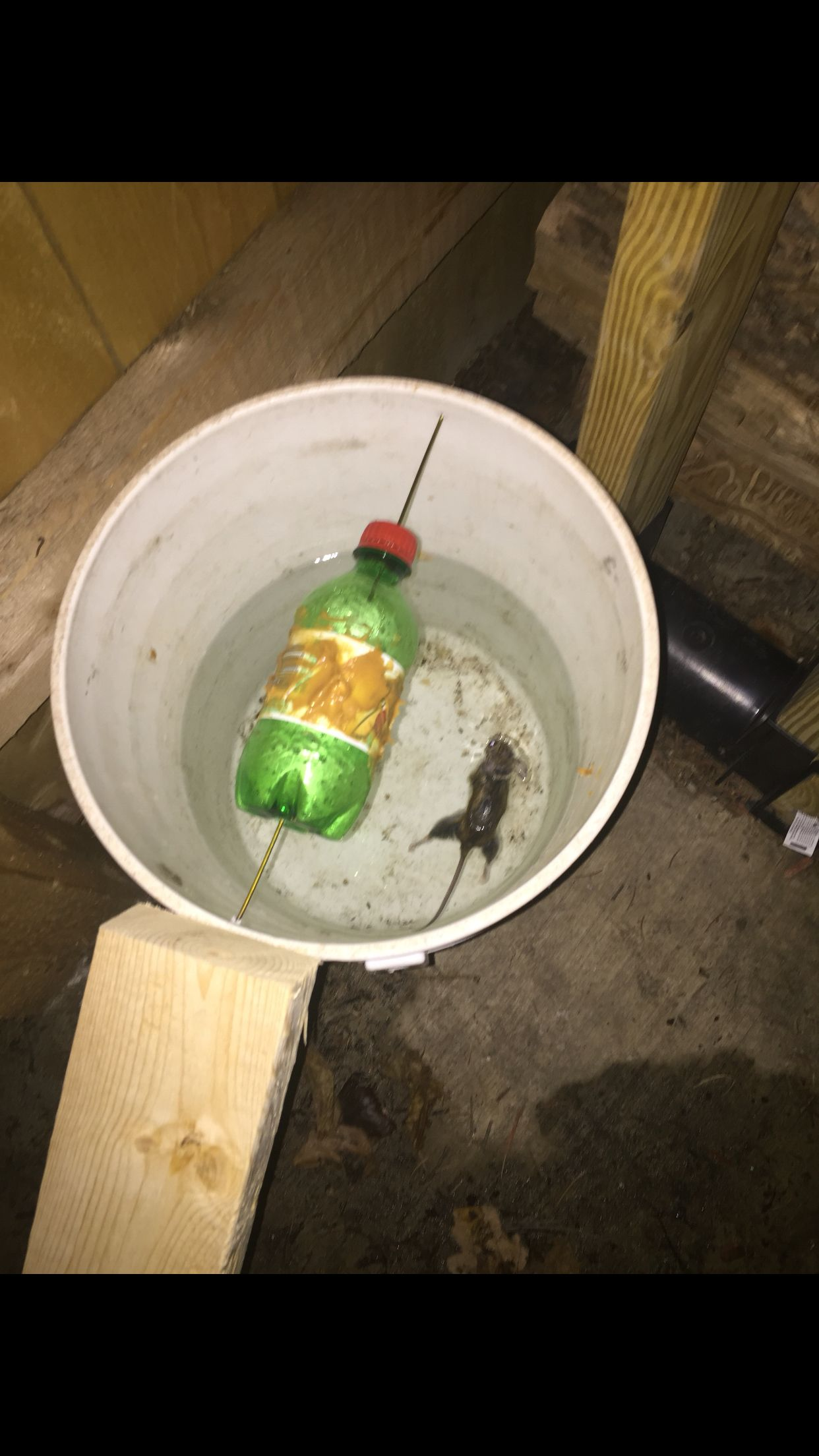 Got the first rat trapped 31216 bucket mouse trap rat