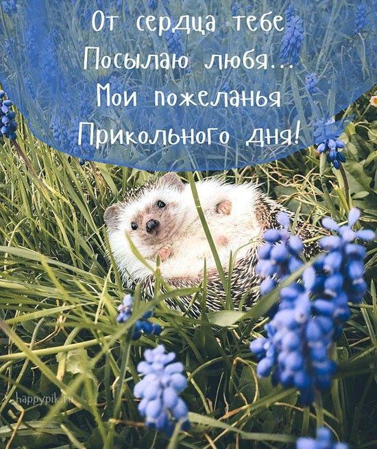 Dobroe Utro Prikolnye Kartinki Dobroe Utro Obyatiya Zhivotnyh