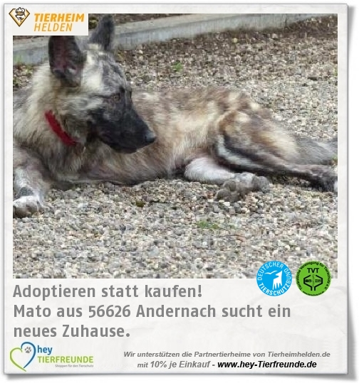 Mato Aus Dem Tierheim Andernach Hat Bei Einem Unfall Sein Vorderbein Verloren Tierheim Tiere Andernach