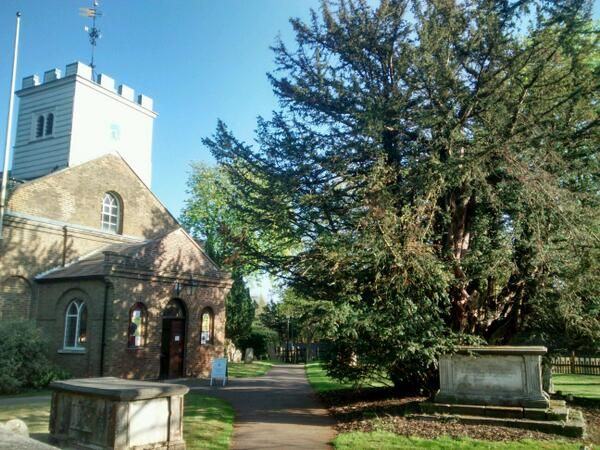 Totteridge yew tree in the churchyard