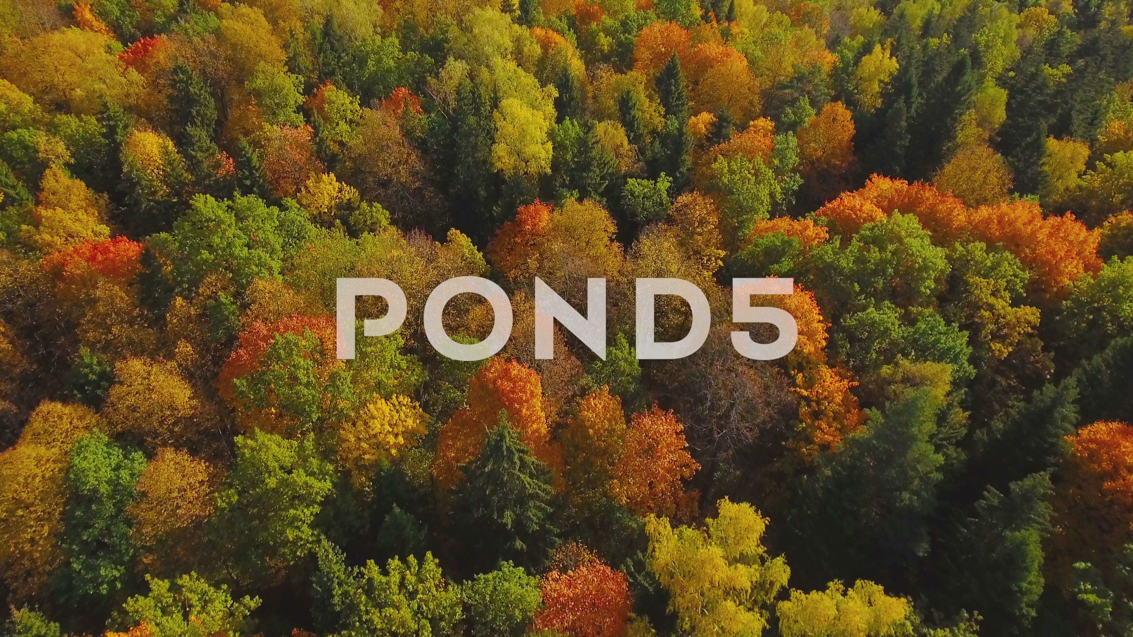 Autumn nature aerial landscape flight over lake and