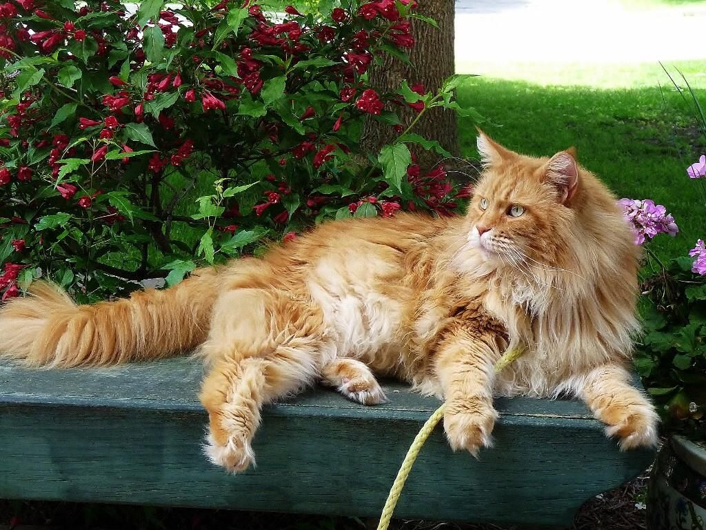 Santiago On Twitter Orange Cats Red Cat Ginger Cats