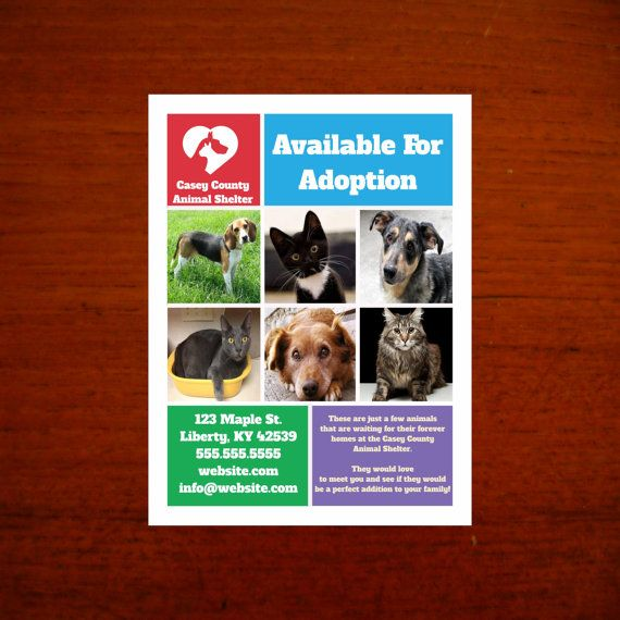 Custom Flyer Design Animal Charity Or Animal By Dtgwebsolutions With Images Animal Charities Animals Custom Flyers