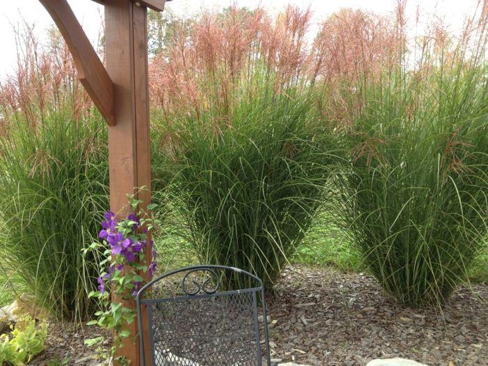 Dekorative Gräser Im Garten   Wissenswertes Und Praktische Tipps