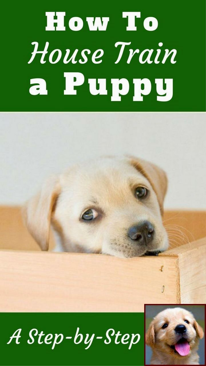 how long does it take to potty train a dog using a crate