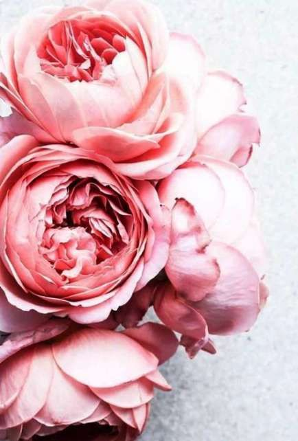 Flowers pink background ana rosa 26 Ideas #flowers