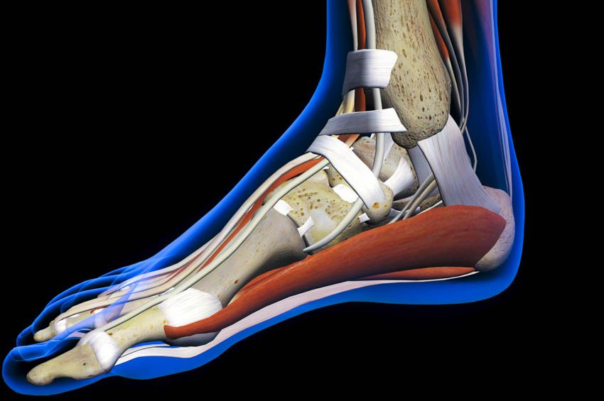 Acupuncture Promotes Ankle Injury Recovery | Injury ...