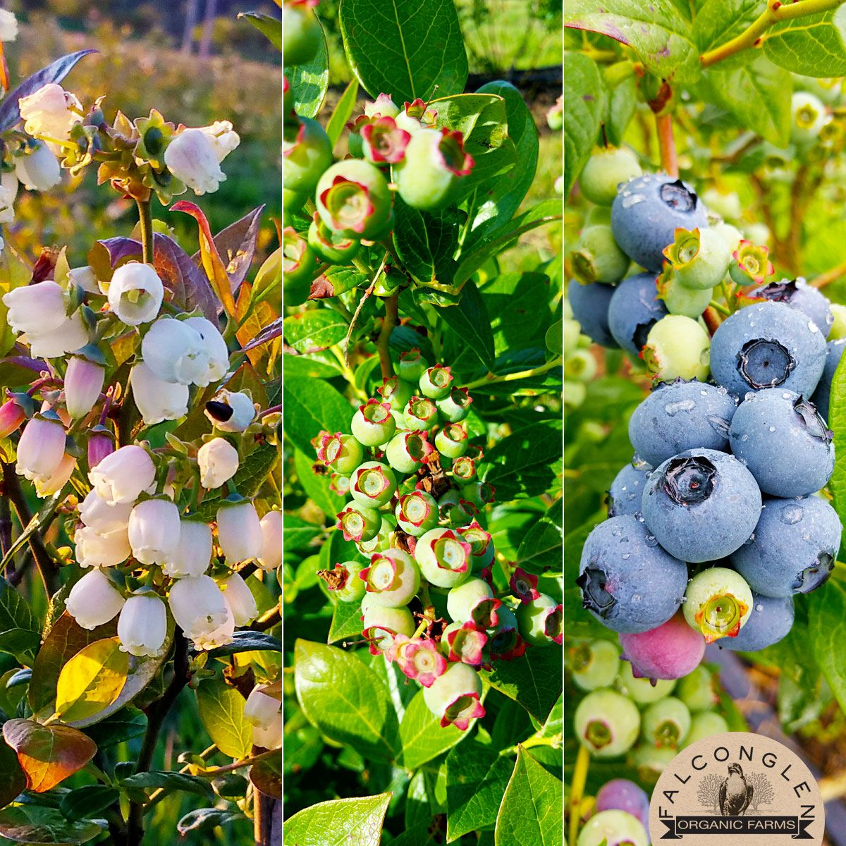 From blossom to berry certified organic every step of the