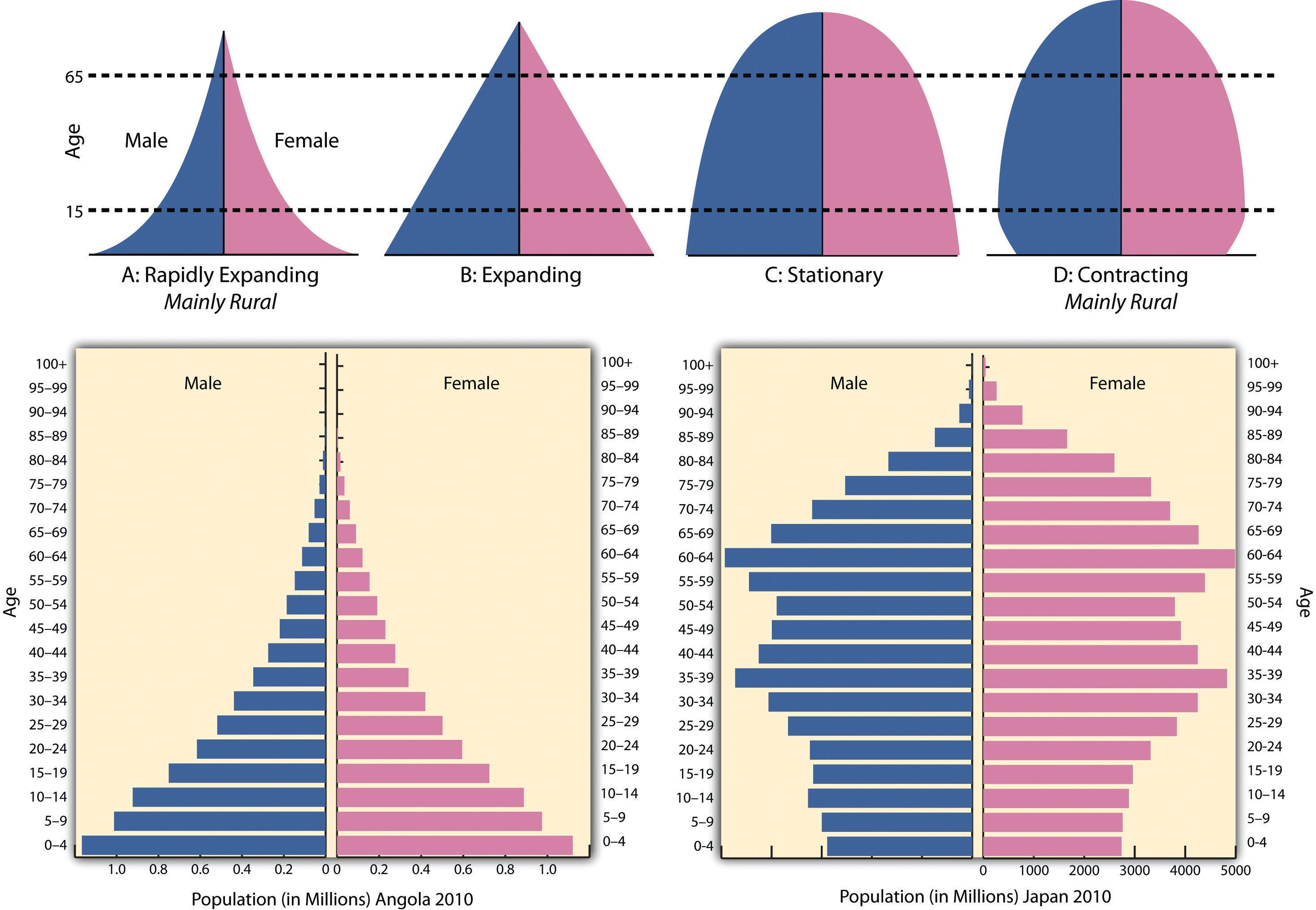 Population Pyramids, types - Stage 2, LDC (Angola), and Stage 4 ...