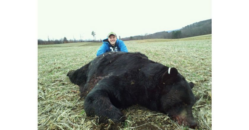 Biggest bear in the world new world record brown bear huge biggest bear in the world new world record brown bear huge bears pinterest big bear brown bear and bears publicscrutiny Choice Image